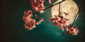 Cherry Blossom and the Misty Moon
